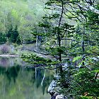 Spring Morning on Profile Lake by Roupen  Baker