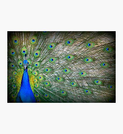 Peacock's Pride Photographic Print
