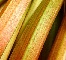 Rhubarb by Robert Steadman
