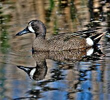 Blue Winged Teal by Larry Trupp