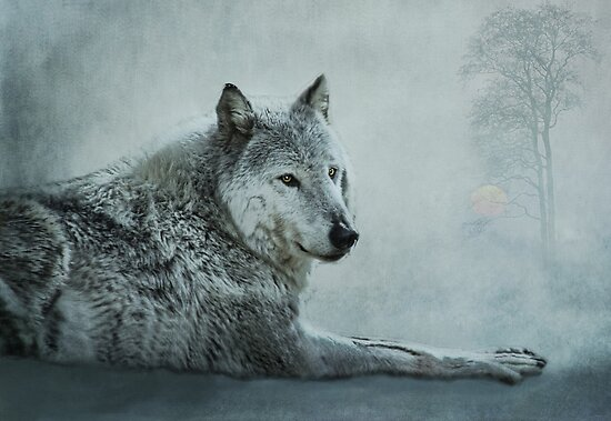 le loup gris by lucyliu