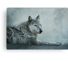 le loup gris Canvas Print