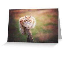 Orange Tabby Cat Greeting Card