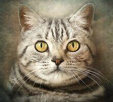 Tabby Cat by polly470