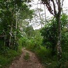 Un Camino by lial
