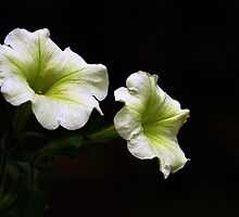 Still Blooming by Sharon Batdorf