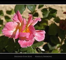 Brushed Pink Rose - - Posters & More by Maria A. Barnowl