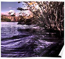 Mangroves on the River Poster
