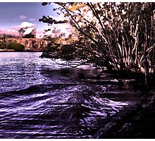 Mangroves on the River Photographic Print