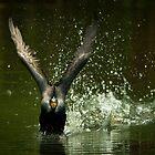 Cormorant Liftoff by Joe Jennelle