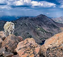Wide Angle Wildlife - Mountain Goat (22mm) by Jay Ryser
