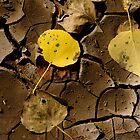 Mud Leaf by Kirstyshots
