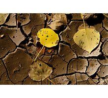 Mud Leaf Photographic Print