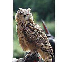 Owl, Wales UK Photographic Print