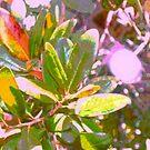 Sunlight through my oak tree by ♥⊱ B. Randi Bailey