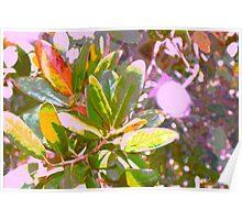 Sunlight through my oak tree Poster