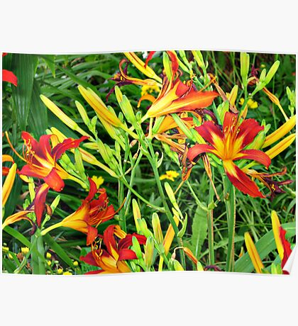 Vibrant Day Lilies Poster