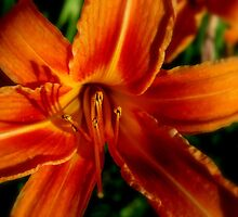 Lovely Lily by Debbie Robbins