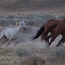 West Desert Horses by Robbie Knight