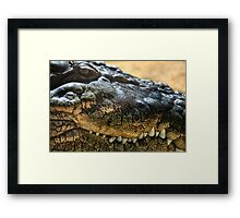 Cold Blooded Predator Framed Print
