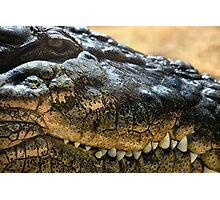 Cold Blooded Predator Photographic Print
