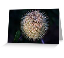 Banksia oblongifolia Greeting Card