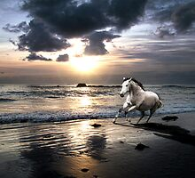 Horses on Greve D'Azette beach Jersey by Nicky Stewart