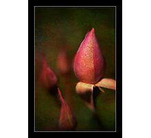 A Lensbaby Image Photographic Print
