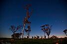 Silo's at Dawn  by Pene Stevens