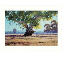 Australian Gum Tree Art Print