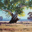 Australian Gum Tree by Graham Gercken