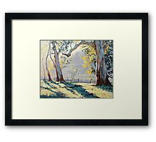 Morning Light Gums Framed Print