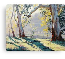 Morning Light Gums Canvas Print