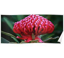 Postcard plant Poster