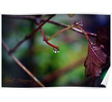 Autumn Teardrop Poster
