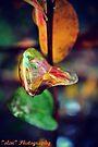 Colourful Autumn Leaf by Zoe Harris