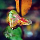 Colourful Autumn Leaf by Zoe Harris