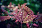 Grandma's Leaf 1 by Zoe Harris