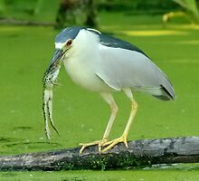 Night Heron_5 Fishing Contest Winners pose by gregsmith