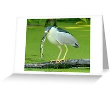 Night Heron_5 Fishing Contest Winners pose Greeting Card