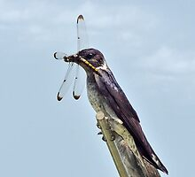 Purple Martin & The Dragonfly by Kathy Baccari