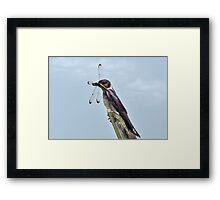 Purple Martin & The Dragonfly Framed Print