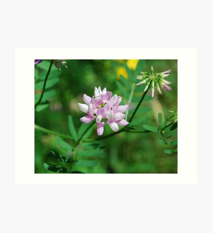 Beautiflul Crown Vetch Art Print
