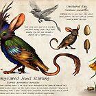 The Jewel Starling by Katie Feldman