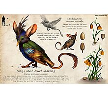 The Jewel Starling Photographic Print