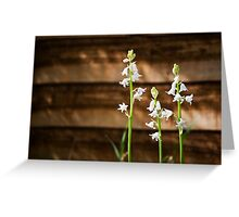 White Bluebells Greeting Card
