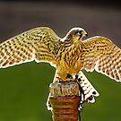 Wings of Light by hebrideslight