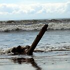 Driftwood with tide rolling in by michael jewkes