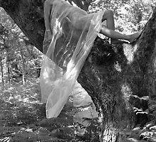 White Veil No.3 by David Robinson