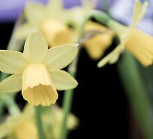 Yellow Flower by George Langridge